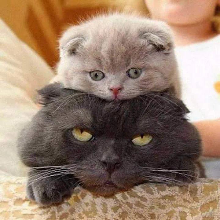 Картинки приколы про котят, открытки дню