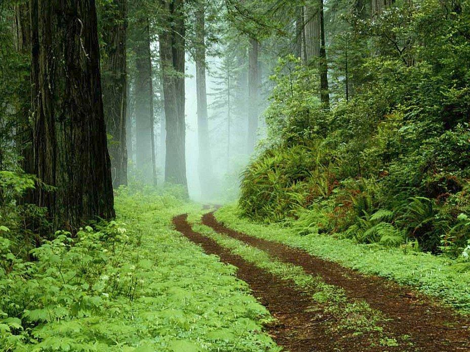 Картинки с надписью лес, день рождения вертикальные