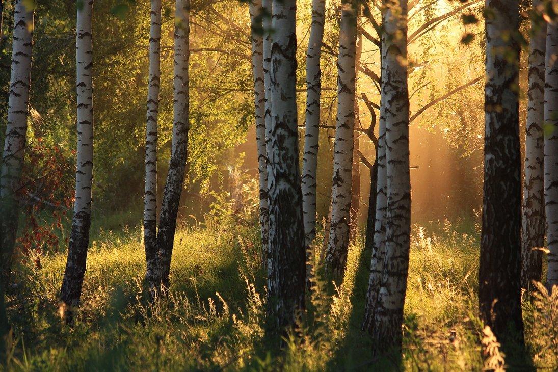 красивые картинки русского леса поведет