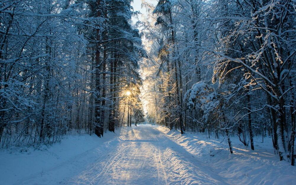 Картинки с зимним лесом и дорогой