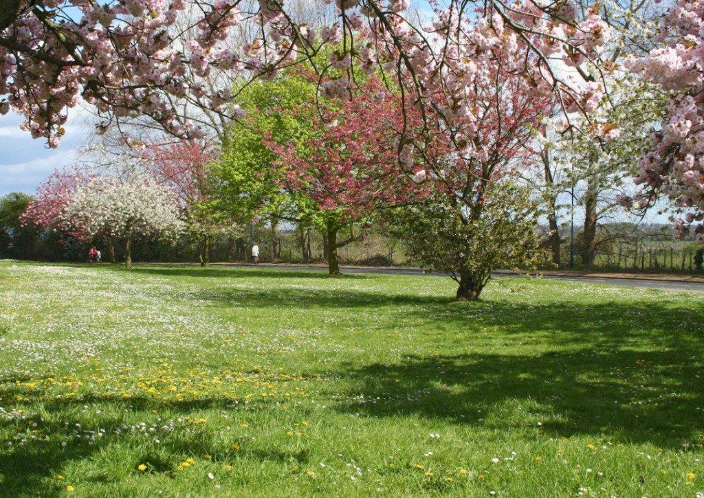 пошаговые пора года весна картинки они отлично себя