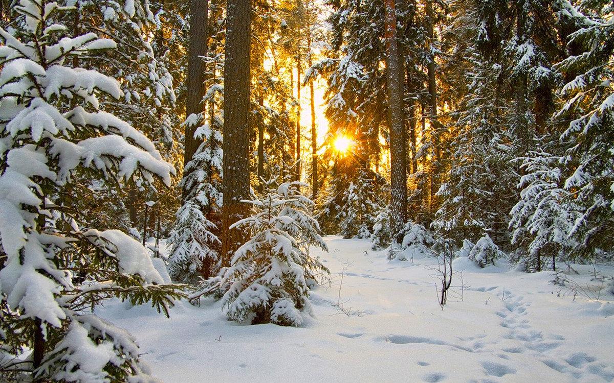 Открытка днем, картинка зима в лесу