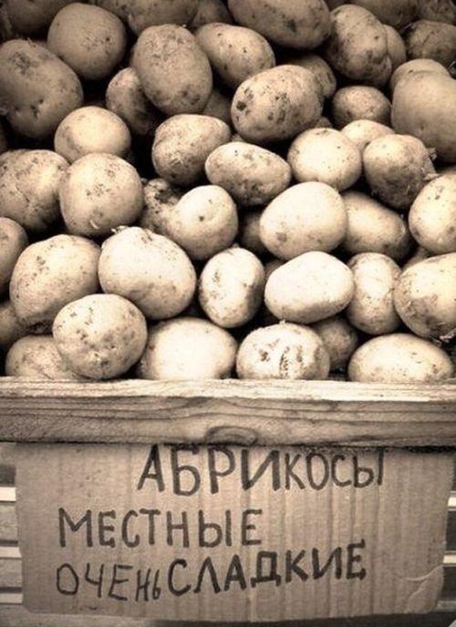 Открытки, прикол про картошку картинки