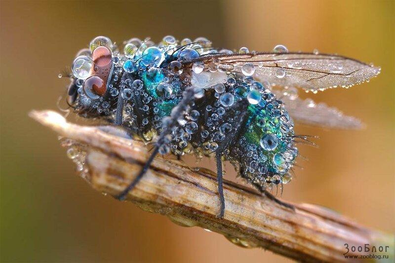 Фото МАКРО: насекомые (24 фото) » Зооблог.ру