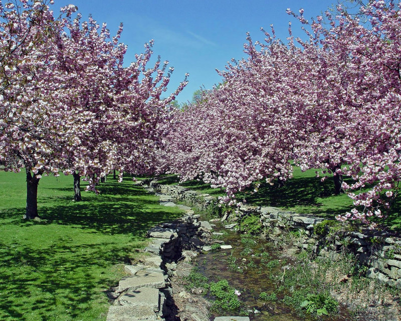 фото цветущих деревьев весной | Photo-Bonus.ru