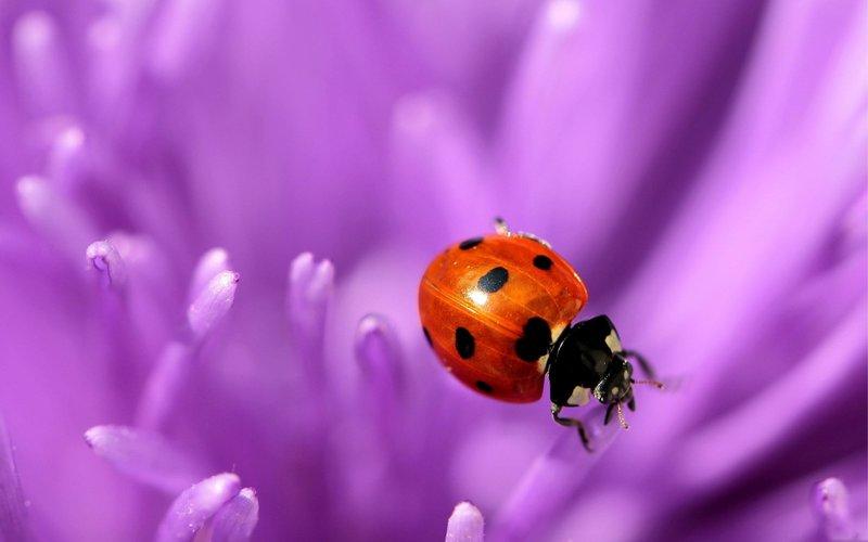 Подборка красочных макро фотографий насекомых и растений id626788