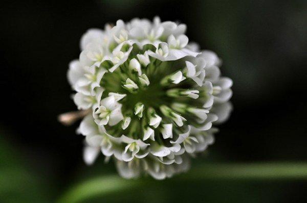Полевые цветы — это мило (20 фото)