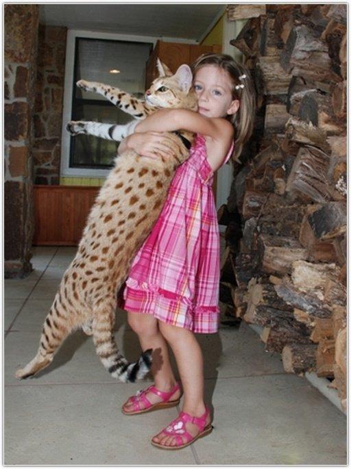 Самая длинная кошка в мире » Зооблог.ру