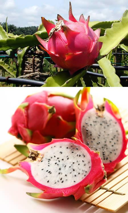 — Самые экзотические фрукты и овощи со всего мира. Часть 1