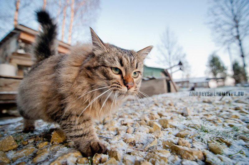 съемка кошки в движении с низкого ракурса