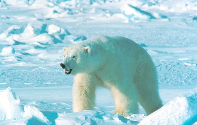 Всё о медведях: 07/03/12