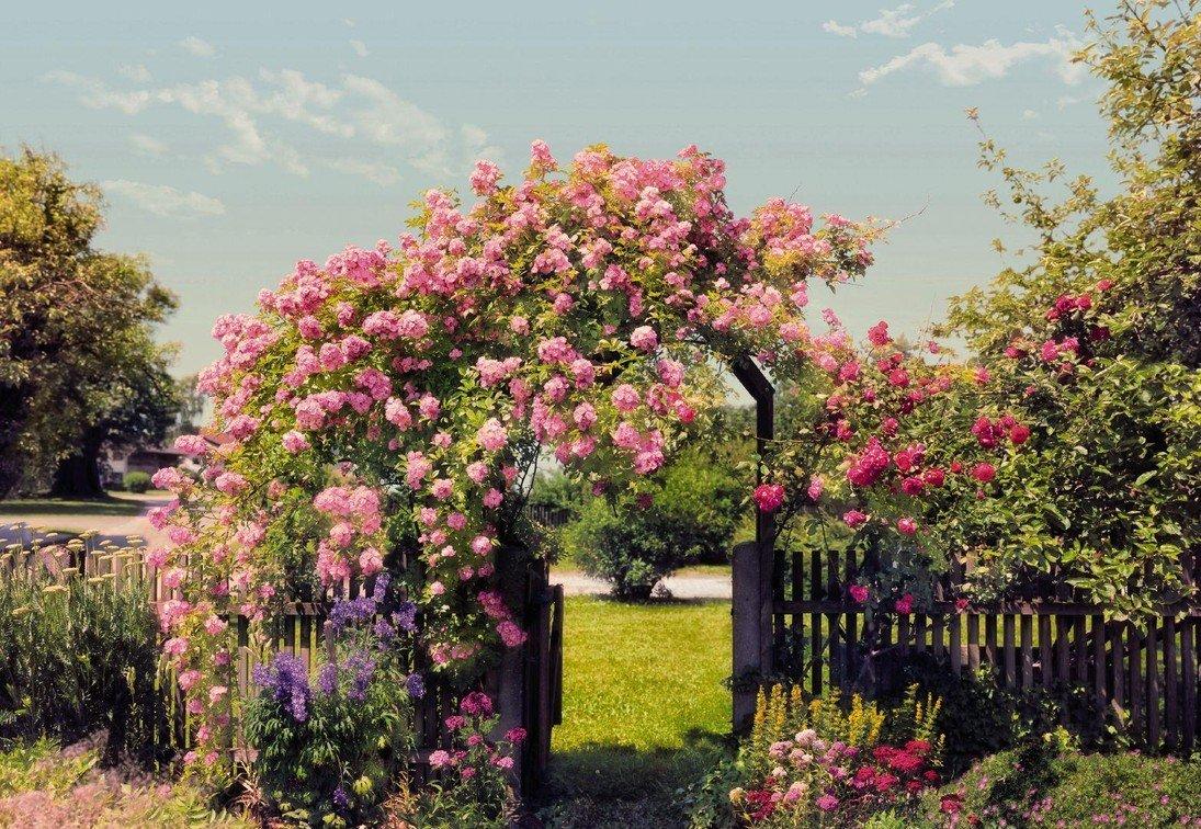 картинки на рабочий стол розы штамбовые поставка
