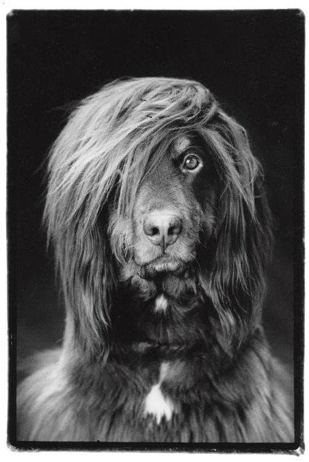 картинки собаки чёрно белые