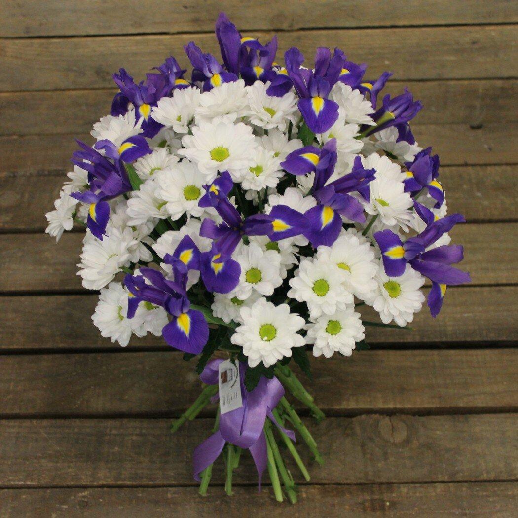 сил фото ирисов хризантемы виды отделок наряду