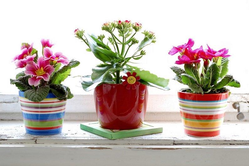 8 cамых популярных комнатных растений