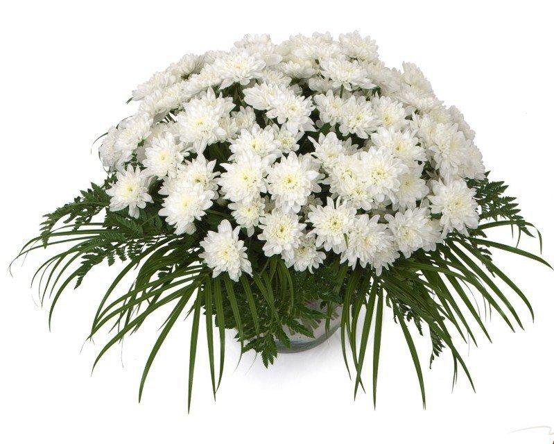 Картинкой, открытки с белыми хризантемами с днем рождения