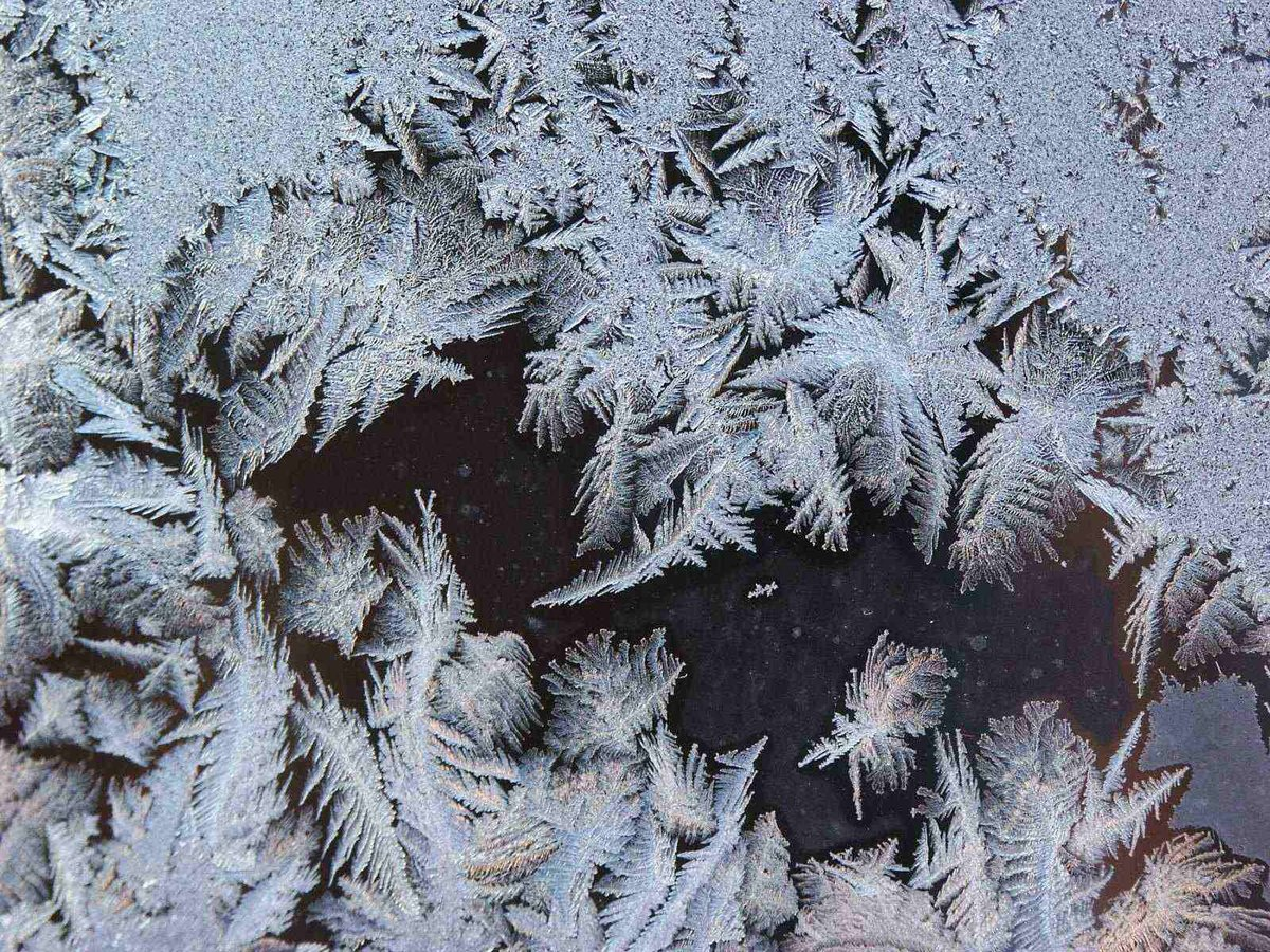 картинки найди животных в морозных узорах ходе прений