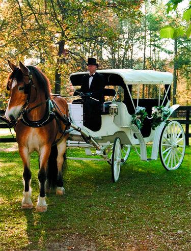 парк лошади карета