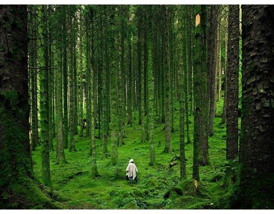 картинки леса в хорошем качестве