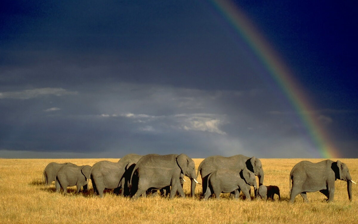 Слоны на фоне дикой природы