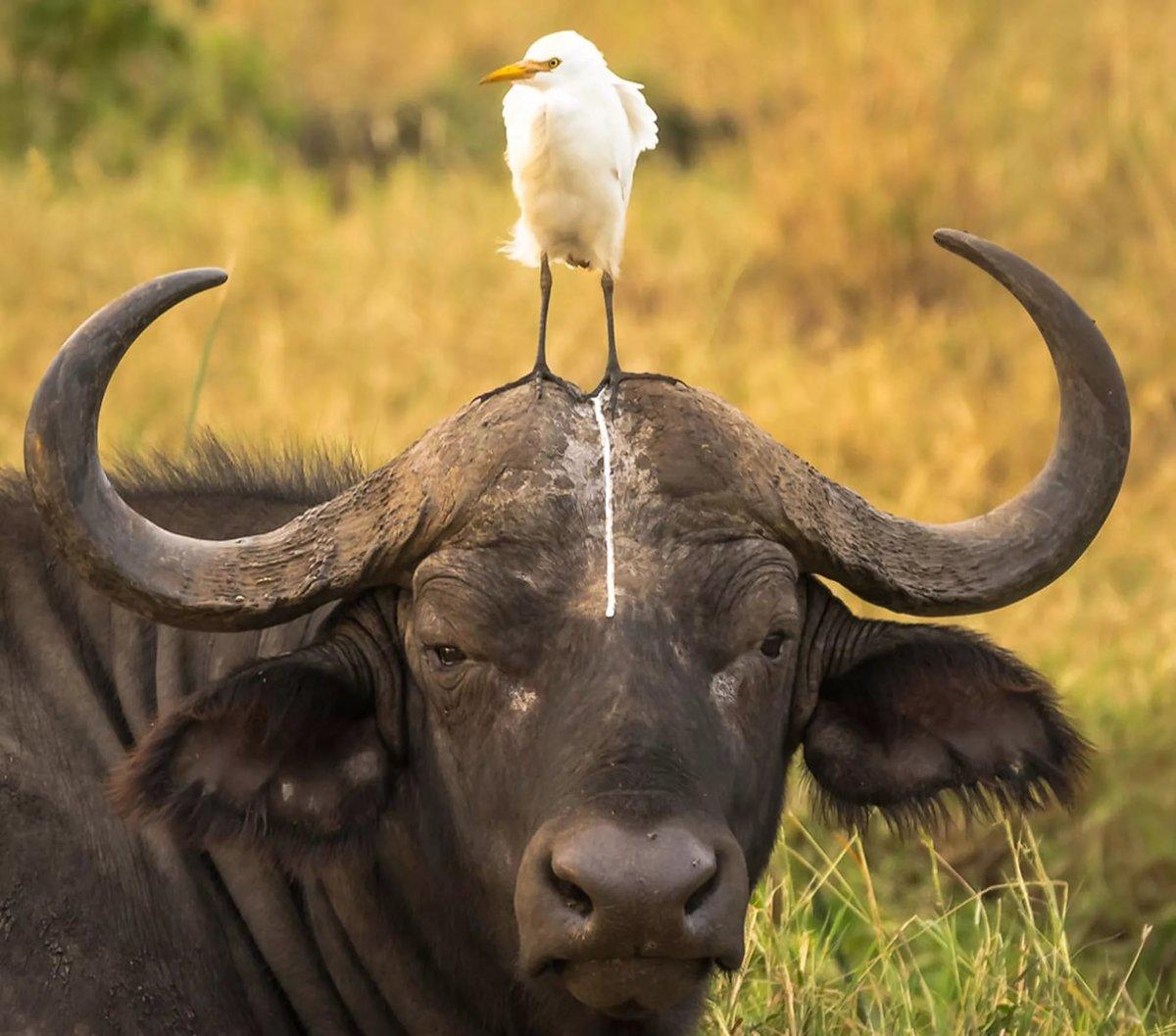 Животные прикольное фото