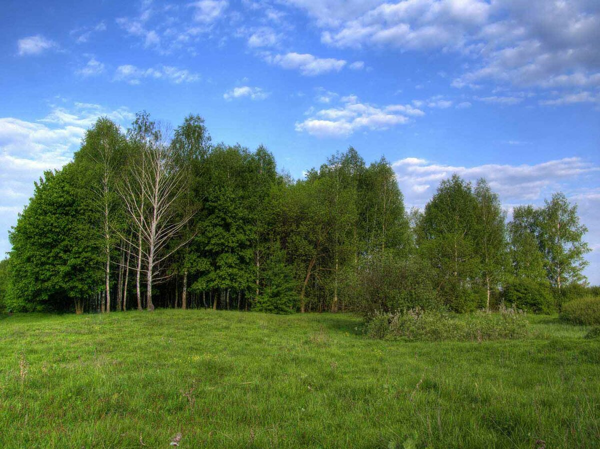 лесные опушки