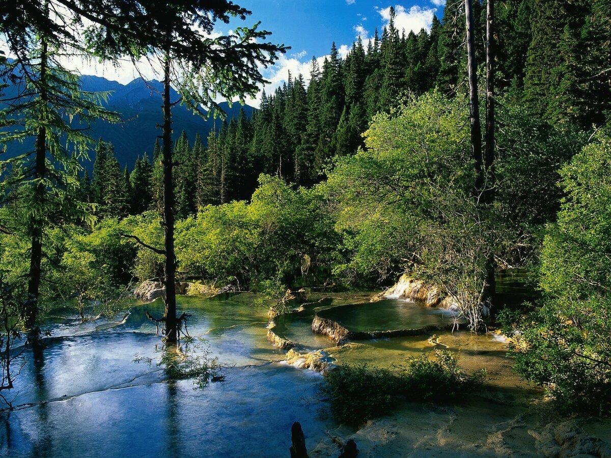 лесная река и сам лес, собственно
