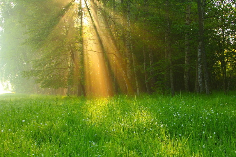 лес летним утром картинки садике