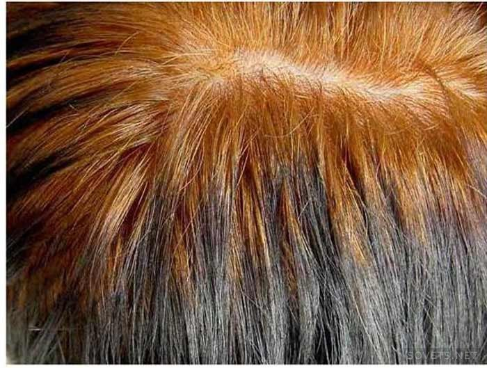седые волосы после хны фото можете изучить все