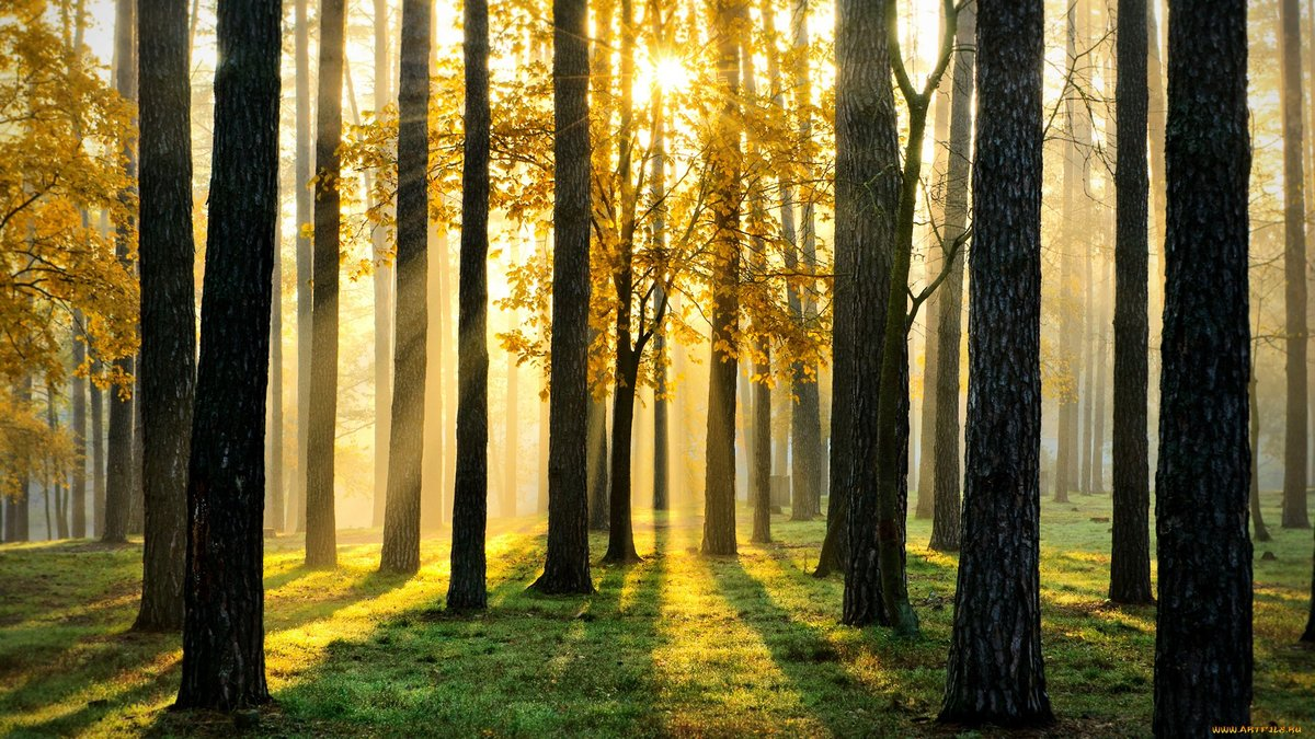 Эшлинн в лесу на природе шатенками любительское русское