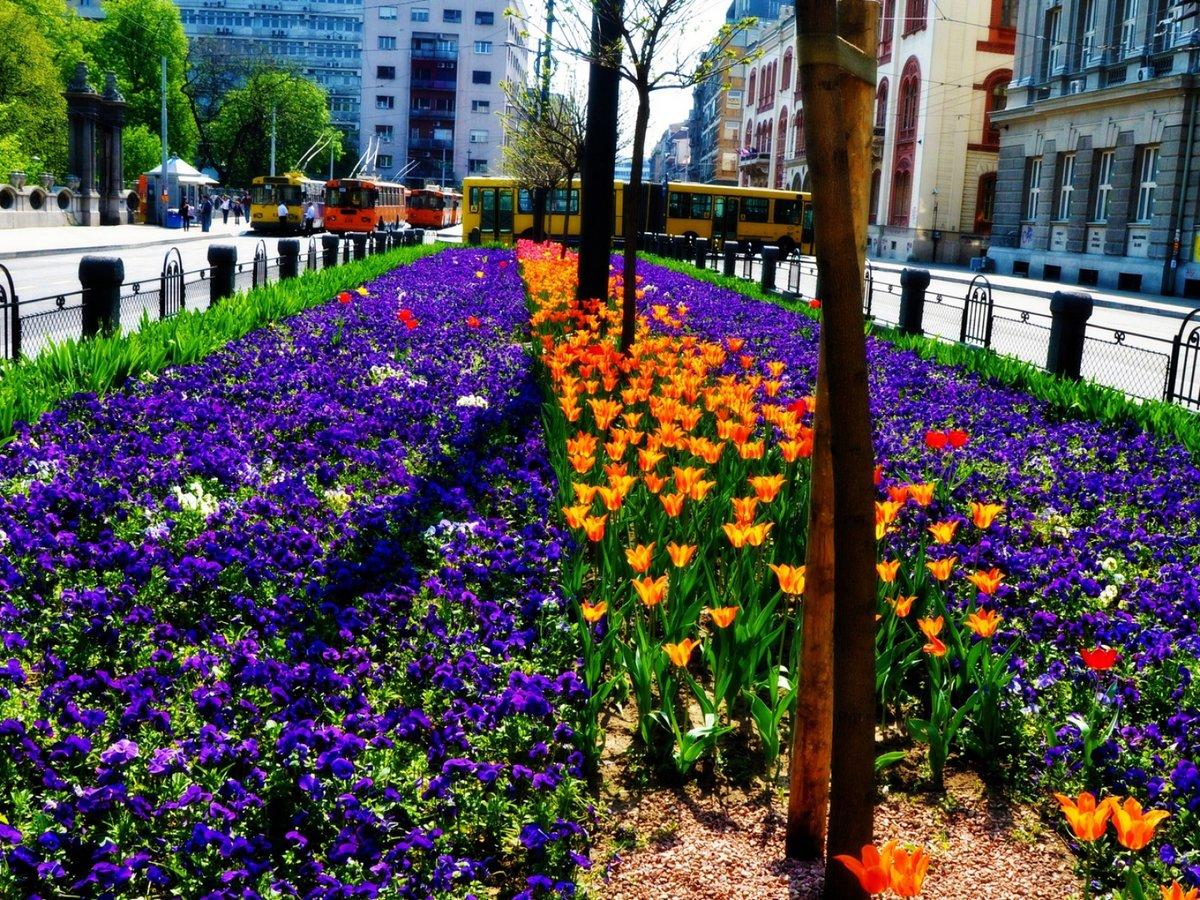 Город цветов картинки