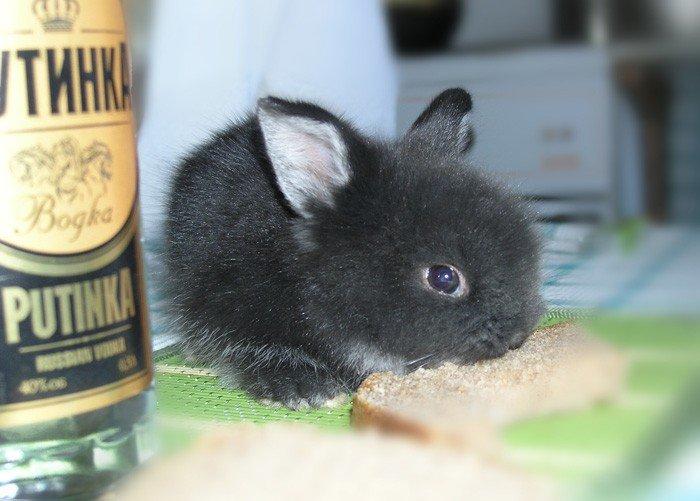 Открытки, смешные картинки с надписями с кроликами