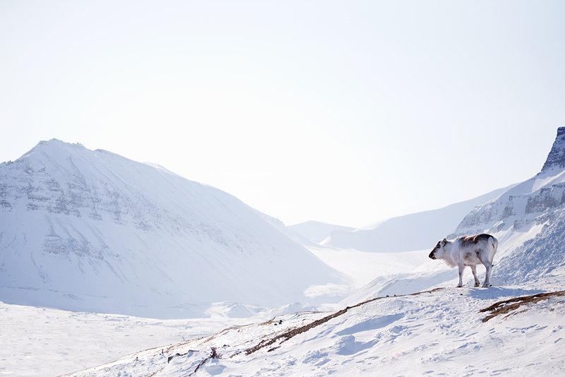 Новогодние праздники –  лучшее время для того, чтобы  отправиться в сказочную страну Лапландию, ведь это настоящая родина Санта-Клауса, страна оленей и снегов, нескончаемых чудес и вечного Рождества.