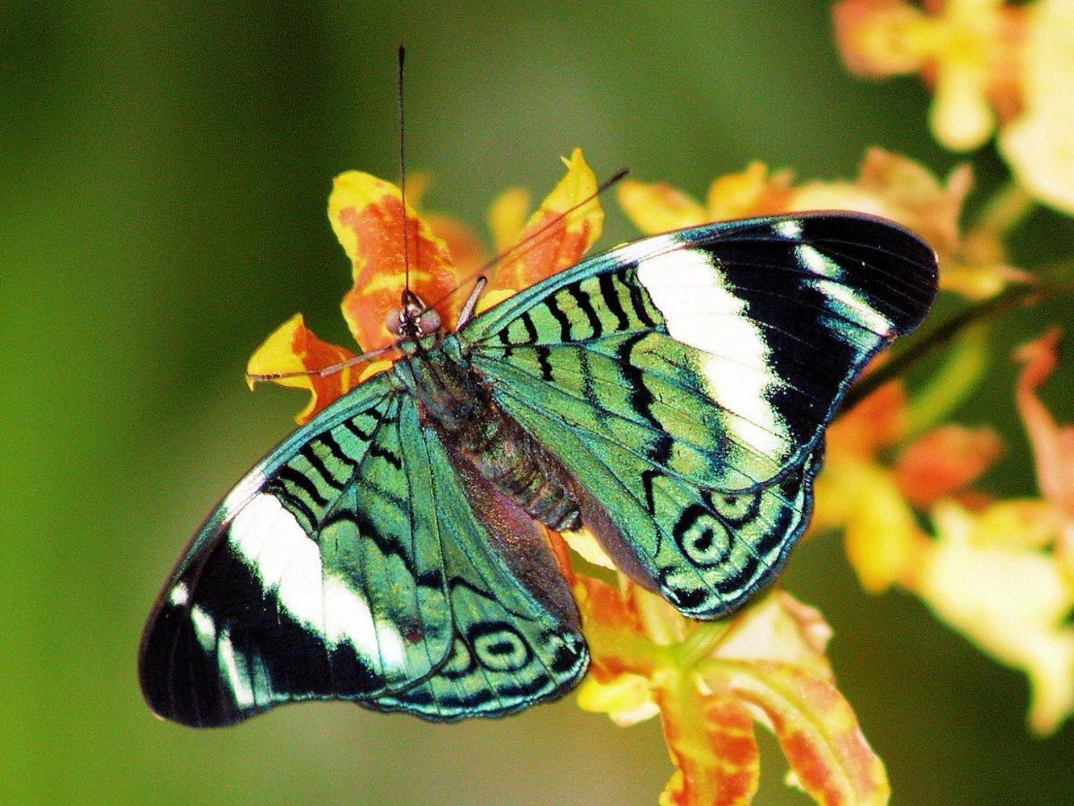 Картинки с бабочками живыми