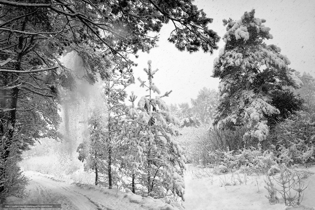 Зима черно-белая картинка