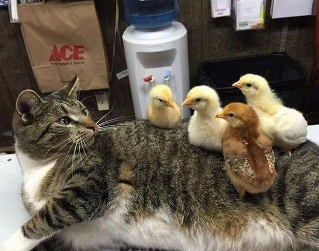 Вы мои котята?