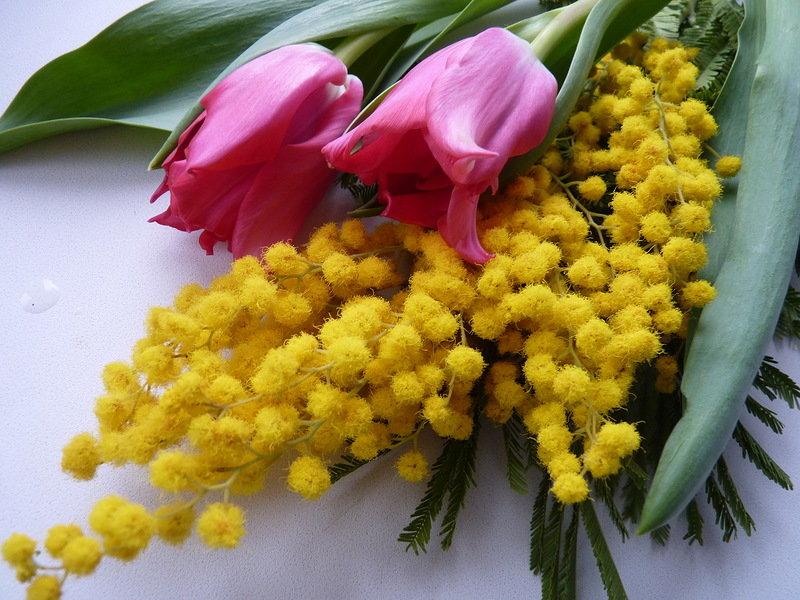 С 8 марта картинки с мимозой и тюльпанами, картинки для