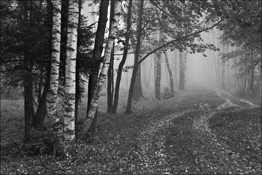 черно белое фото лесного пейзажа пройдет твоя