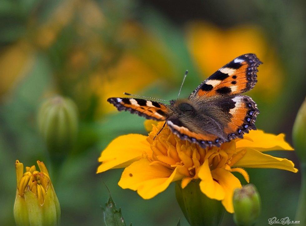 Флора и фауна красивые картинки