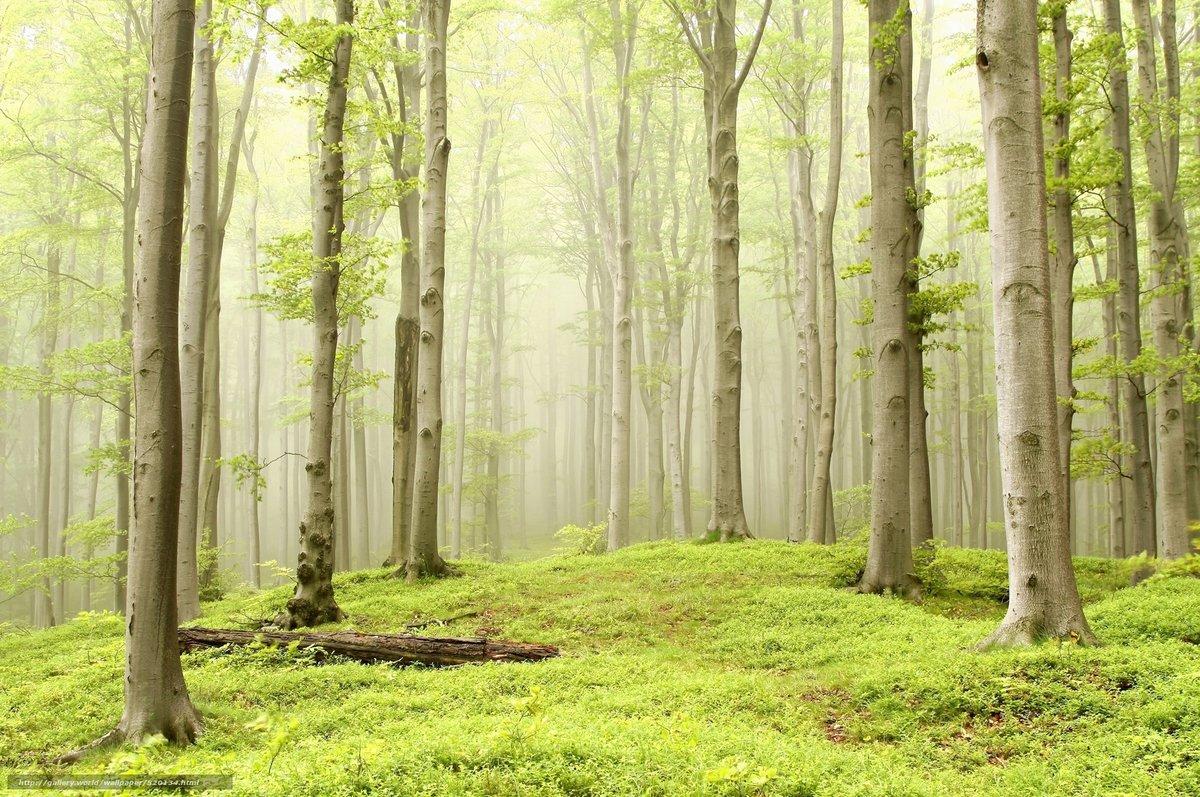 Лес открытки