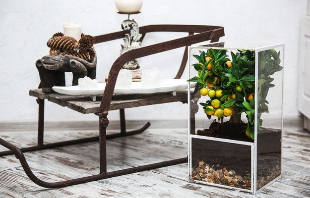 Перевернутые кашпо, минималистичные флора-кубы, акваферма, фитостена и еще несколько невероятных и стильных способов добавить в интерьер живую зелень