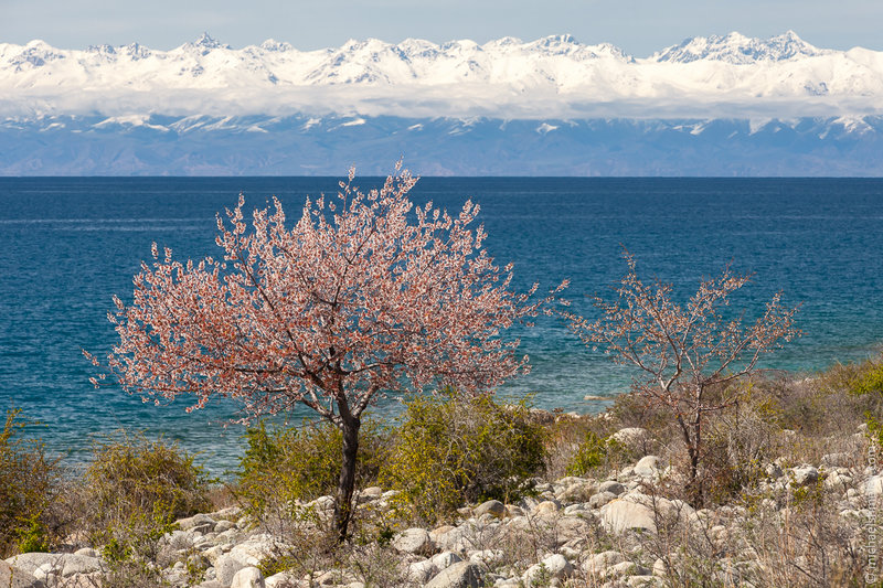 Весна в Киргизии. Фото: Михаил Шмелёв.