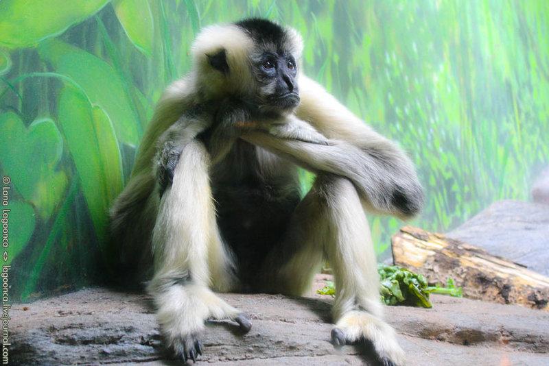 Орегонский зоопарк
