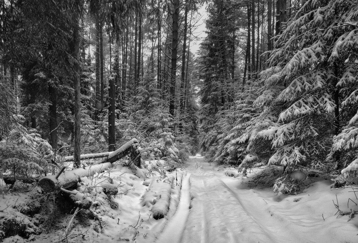 черно белая фотография зимней тайги времена