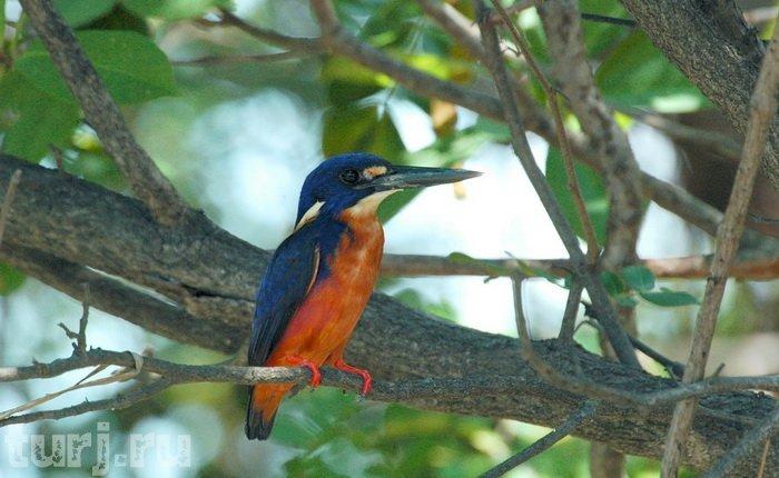 Уникальные ландшафты парка Какаду стали настоящим домом для 60 видов млекопитающих, 280 видов птиц, 1000 видов насекомых и 117 видов рептилий.