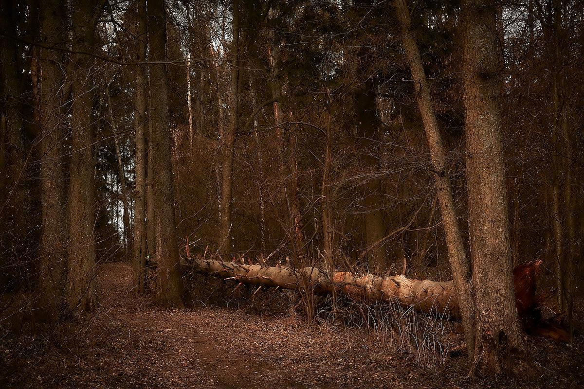 я карамелю в темном сосу мою дремучем лесу