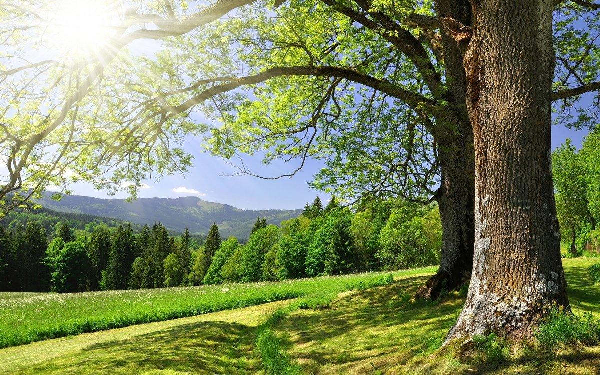 Картинки красивый, деревья, просёлочная дорога, пейзаж, Beautiful ... красивый, деревья, просёлочная дорога, пейзаж, Beautiful landscape, лес