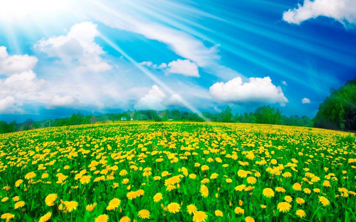 Открытки природа цветы и солнце