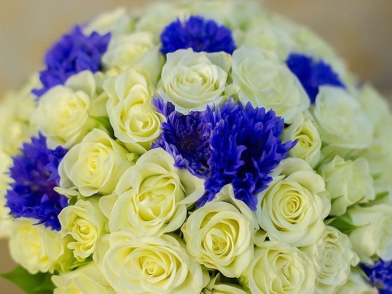 Невесты славить, свадебный букет из белых и алой роз с синих хризантем
