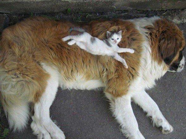 Тёплый коврик